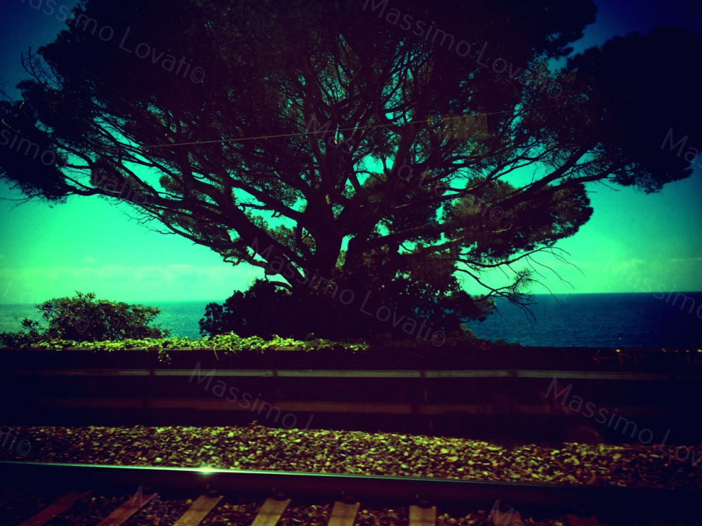 Tree from the train