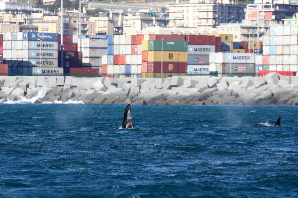 09/12/2019, Le orche all'imboccatura del Porto di Voltri
